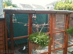 outdoor bird aviary