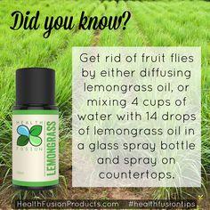 No more fruit flies!