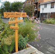 LE MANGE-TROTTOIR Un bel exemple montréalais de réappropriation citoyenne de l'espace public urbain à des fins de jardinage pédagogique et social