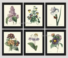 Botanical Set of 6 Prints Antique Redoute Beautiful Purple Violet Flowers Wildflowers Iris Aster Lilac Pansies Butterfly Home Room Decor Wall Art Unframed. Beautiful set of 6 prints based on antique botanical illustrations from 1887. Wonderful details, colors and natural history feel. • The prints measure 4x6, 5x7, 8x10, or 11x14 inch. based on your selection come with a white border for easy framing. • Printed on professional artist archival matte paper. • The prints are part of Amazon...