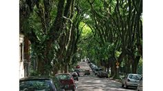 This lovely street is located in Brazil.