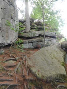 Rocks at seneca point at cook forest pa