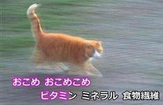 Japanese Aesthetic, Aesthetic Art, Angel Aesthetic, Doja Cat, Cybergoth, Vaporwave, Cute Cats, Grunge, Kittens