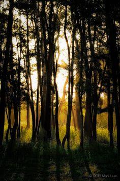 #argentina   #provinciadebuenosaires   #miramar   #forest   #bosque   #trees   #arboles   #treetuesday   #mysterious