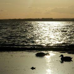Romantischer Abend mit Ente
