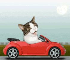 Cat Funny Drives Car Driving Kitty Cats LOL Laughs Laughing Icon ...