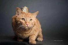 15 Best Dog Birthday Hat Images
