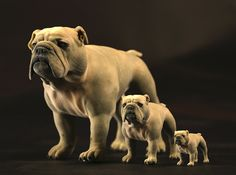 Bulldog L Full Color Sandstone 3d printed XXL,L,S size