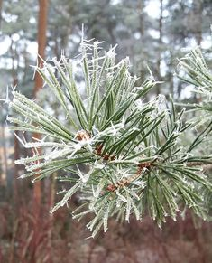 Tammikuussa ihastuttivat jääkaktukset - niistä ja muista tammikuun muistoista enemmän blogissa  #uusiblogipostaus #newblogpost #linkkibiossa #linkinmybio #tammikuu2018 #january #muistot #memories #winter #icecactus #lifestyleblogger #nelkytplusblogit #åblogit #ladyofthemess