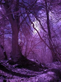 purple nature = love