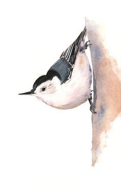 2016 Want! - Nuthatch painting watercolor painting,  5 by 7 print watercolor painting, N2014, wall art, nuthatch print