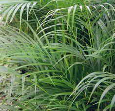 Viete, ktoré rastliny vás doma ochránia pred škodlivými látkami? | Môjdom.sk Plants, Plant, Planets