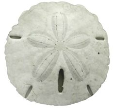Sand Dollar Pillow Round: http://www.completely-coastal.com/2014/01/sea-life-shaped-pillows-starfish-sand-dollar-seahorse.html  Made from a Photograph of a Real Sand Dollar Found Washed up on the Beach.