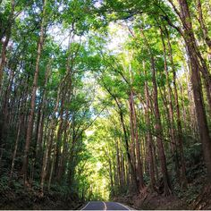 This beautiful man made forest in Bilar, Bohol, Philippines 🇵🇭♥️😍 Stuff To Do, Things To Do, Siargao Island, Bohol Philippines, Whale Watching Tours, What To Do Today, Top Destinations, Palawan, Cebu
