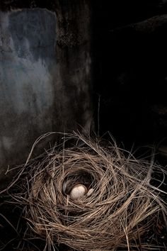 Inspiration, photographs and backgrounds: brown and black: bird's nest Fotografia Macro, Bird Feathers, Graphic, Beautiful Birds, Bird Houses, Mother Nature, Still Life, Creatures, Inspiration