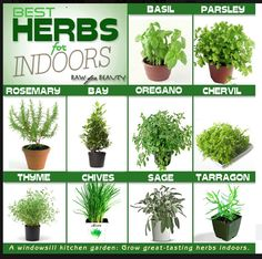 Herb gardening is becoming more and more popular every day, and for a good reason. Herbs have practical value, serve a purpose, and with herb gardening you can actually use your plants. When most people think of herb gardening they Container Herb Garden, Herb Planters, Garden Plants, Indoor Plants, Indoor Herbs, Hanging Plants, Succulents Garden, Air Plants, Cactus Plants