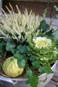 How to Plant Potted Flowers Outdoors in the Soil : Garden Space – Top Soop Autumn Inspiration, Garden Inspiration, Container Plants, Container Gardening, Garden Angels, White Gardens, Autumn Garden, Plantation, Types Of Plants