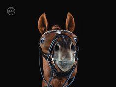 Pferd im Fotostudio von Tierlicht www.tierlicht.com Horse Photography, More Pictures, Horses, Animals, Photo Studio, Animales, Pictures, Animaux, Equine Photography