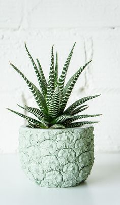 Cast Cement Pineapple Planter