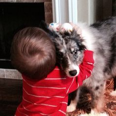 Big hug for a Sheltie with lots of patience!