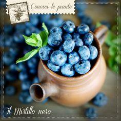 MIRTILLO NERO I frutti del mirtillo nero sono usati in fitoterapia per le loro numerose proprietà: oltre a svolgere un'azione antiossidante, l'estratto secco e il succo disidratato possono infatti sostenere il benessere della vista e la funzionalità del microcircolo (contrastando la pesantezza delle gambe). Il prodotto Dr. Giorgini con mirtillo nero è MIRTILLO 360 g polvere http://www.drgiorgini.it/index.php/serimirtil360-drg-mirtillo-360-g-polvere #microcircolo #gambepesanti #antiossidante