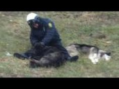 Police Officer Does This In the Freezing Cold When He Sees Two Lost Dogs And It Goes Viral! (Video)  All too often, these days, we fear for our dogs when we see a man in blue. Not so with this story.