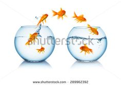 Find Group Goldfishes Change Fishbowl stock images in HD and millions of other royalty-free stock photos, illustrations and vectors in the Shutterstock collection. Thousands of new, high-quality pictures added every day. Photo Grouping, Goldfish, Wine Glass, Photo Editing, Royalty Free Stock Photos, Fishbowl, Change, Leo, Pictures