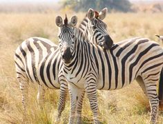 Wildlife of Botswana