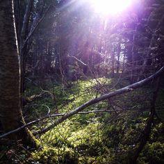 Solgløtt i skogen