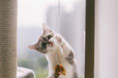 Play! | Flickr – 相片分享!