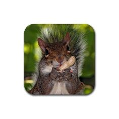 Science for kindergarten kids about rodents. Science site for young kids - easy science for your kid all about rodents. Hamsters, Rodents, Animals And Pets, Baby Animals, Funny Animals, Cute Animals, Wild Animals, Funny Squirrel Pictures, Funny Animal Pictures