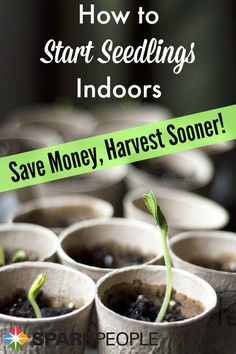 Get a jump on your vegetable garden (and save money) by starting your seeds indoors this year--here's how! | via @SparkPeople #food #gardening