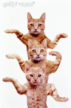 """""""THREE EGYPTIAN CATS"""""""