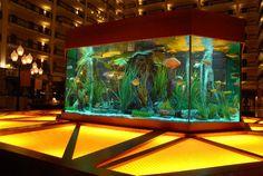 All Aquarium Types - Variety Gallery - Fish Gallery Inc.
