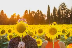 """Sunflower fields in France - The Gary Pepper Girl """"I love the sun, warmth and the yellow!"""