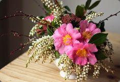 camellia mckenzie powell