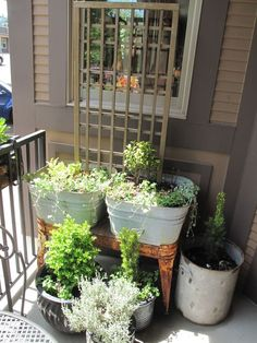 See the double washtubs backed up with a trellis. Would be perfect for clematis or trumpetvine.