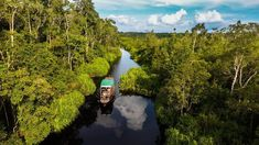 Where to take the best orangutan pictures? Come along for the ride through the jungle of Tanjung Puting in Borneo, Indonesia where you can find them roam wild. Borneo Orangutan, Orangutans, Sarawak Tourism, Sarawak Cultural Village, Bandar Seri Begawan, Kota Kinabalu, Kuching, Once In A Lifetime, Plan Your Trip