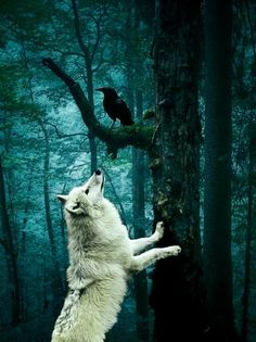 """As Venom hummeda pretty song, a Raven landed on a branch next to her. """"Hello! Which Spirit are you?"""""""