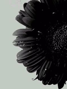 black flower and water