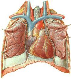Arte Com Grey's Anatomy, Eye Anatomy, Medical Anatomy, Medical School, Medicine, Cardio, Healthy, Motivational Books, Being A Nurse