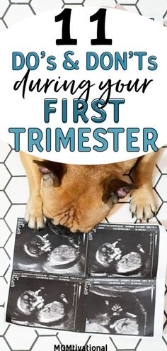 1st Trimester of Pregnancy Dos and Don't! What you can and can't do when you find out your pregnant! First time pregnancy tips you need to know. First trimester pregnancy tips. Morning sickness remedies for the first 12 weeks. pregnancy dos and don'ts food list #pregnancy #pregnancytips #firsttrimester #1sttrimester