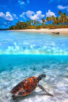 Located in the Indian Ocean, Zanzibar is a breathtaking spot to escape from the world, Tanzania, East Africa. 🌻 For more great pins go to The Ocean, Ocean Life, Strand Resort, Places To Travel, Places To See, Vacation Places, Travel Things, Travel Destinations, Under The Sea
