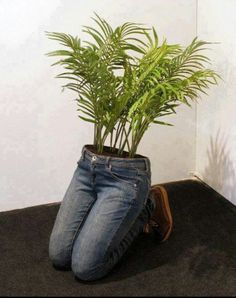 Trouser plants. No instructions on how this is done....but then again, it's not rocket science.