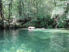 Econfina Springs near Panama City , FL. You cannot imagine the beauty of this place--pictures do not do it justice.