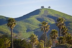 TWO trees ventura Ventura County California, Sunny California, California Coast, California Living, Southern California, Ventura Homes, Port Hueneme, Two Trees, Real Estate Houses