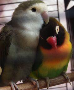 love bird by nadzie.deviantart.com