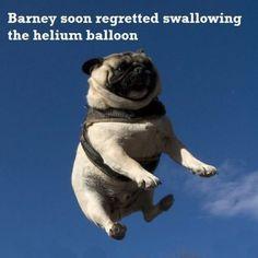 Good byyyyeeee Barney!
