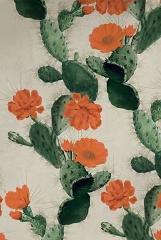 cactus orange flowers Kingdom Home wallpaper