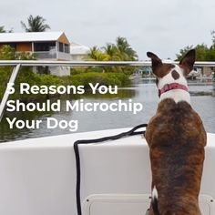 Over 10 million pets are reported lost or stolen each year. Here's 5 Reasons You Should Microchip Your Dog. Parenting Goals, Parenting Styles, Foster Parenting, Parenting Humor, Parenting Classes, Cat Facts Text, Dog Facts, Love And Logic, Cats Bus
